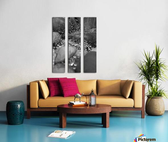 Spiderweb Raindrops B&W Split Canvas print