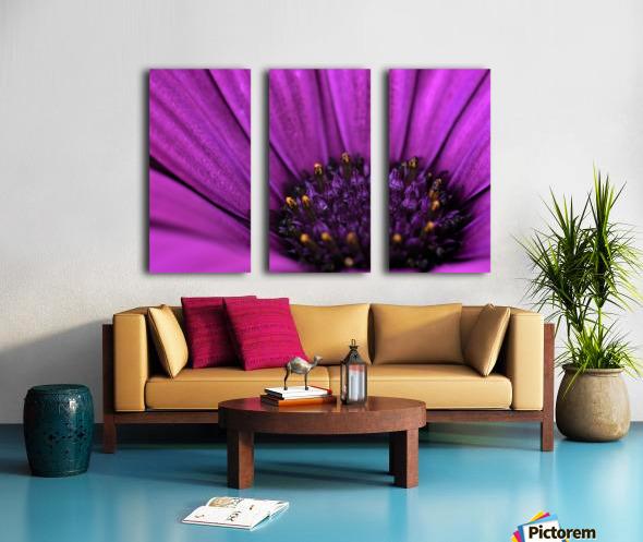 Purple Osteospermum Daisy Photograph Macro Split Canvas print