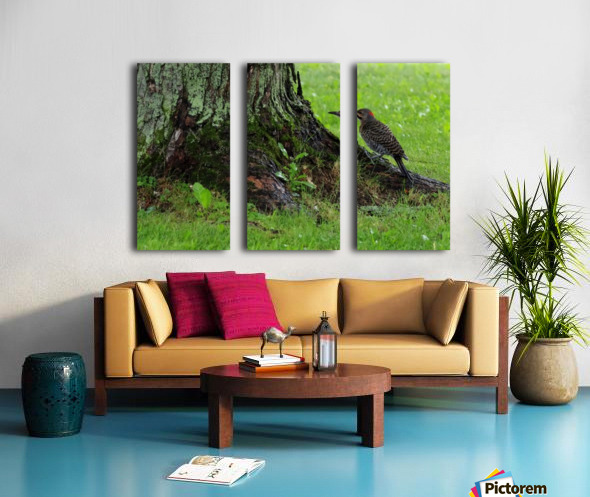 Pic flamboyant  Split Canvas print