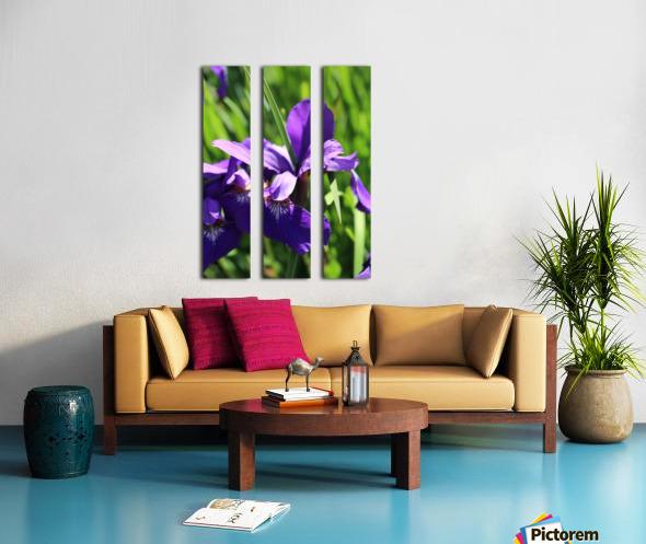 Purple Iris Split Canvas print