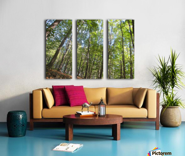 Landscape (249) Split Canvas print