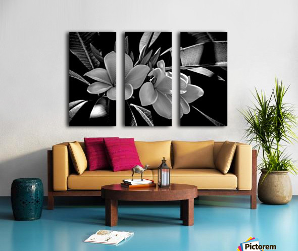 Plumeria In Black And White Split Canvas print