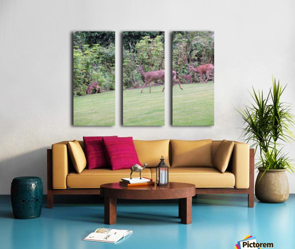 Deer Split Canvas print