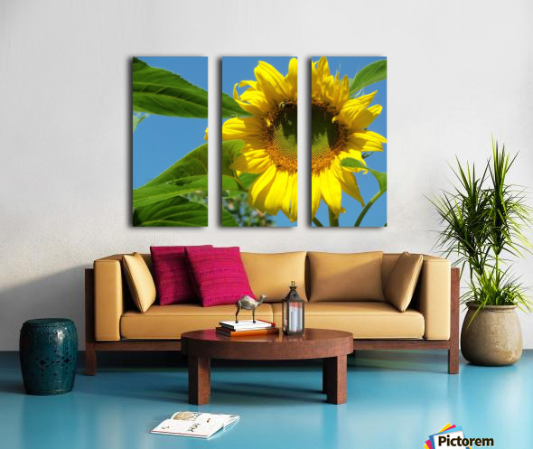 Sunflower Split Canvas print
