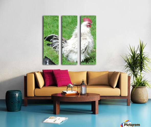 Chicken Split Canvas print