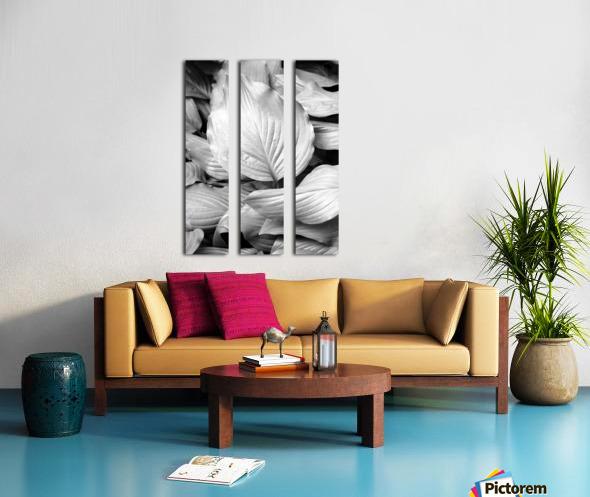 Softly Curving Foliage BW 062618 Split Canvas print