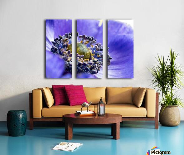 Blue Flower Anemone Close-up Macro Split Canvas print
