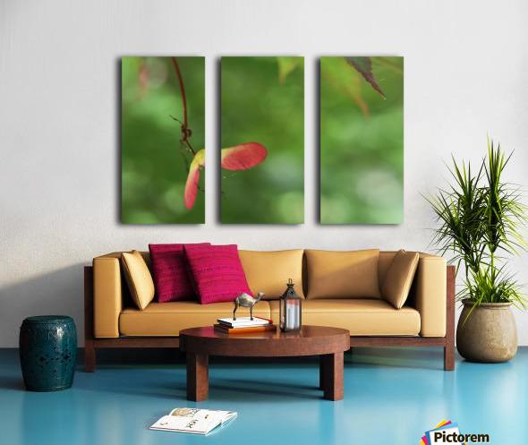 Japanese Maple Seed Split Canvas print