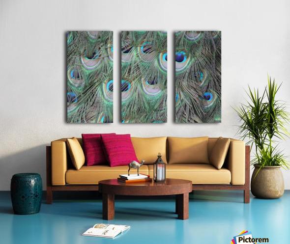 peacock feather pattern plumage Split Canvas print