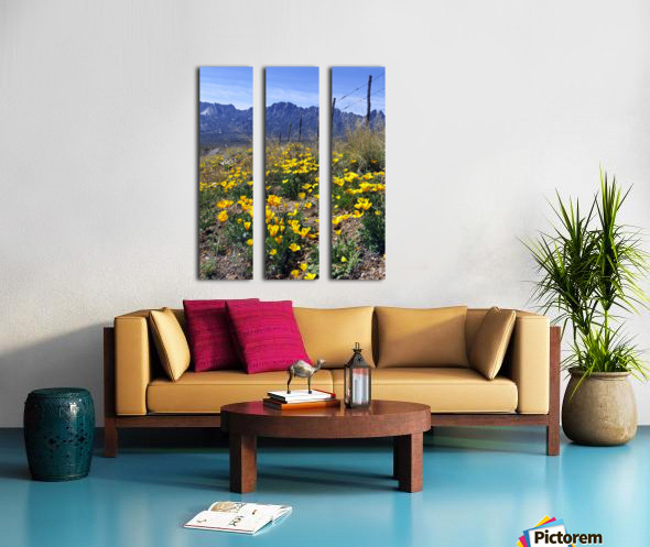 April at Aquirre Springs Split Canvas print