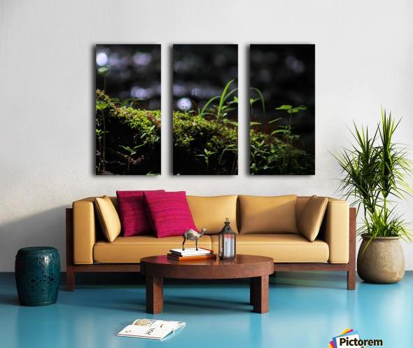 Beautiful Moss Split Canvas print