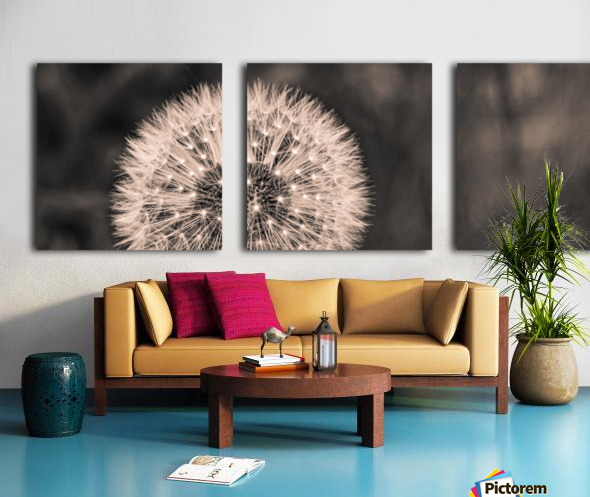 Late Season Dandelion 2 Split Canvas print