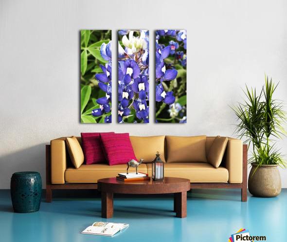 Bluebonnet Split Canvas print