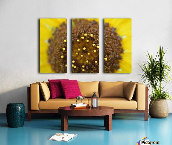 Sunflower Stars Split Canvas print
