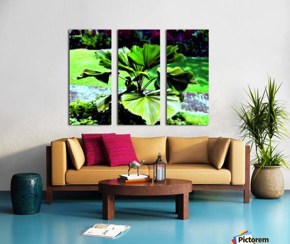 BO902 - Licuala peltata Leaves Split Canvas print