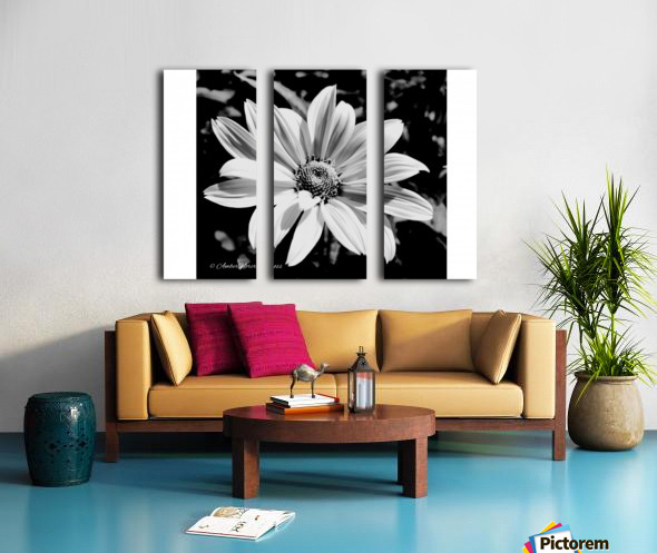 Daisy in bw Split Canvas print