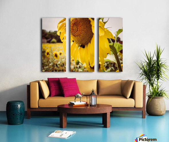 Sunflower with Bee Split Canvas print