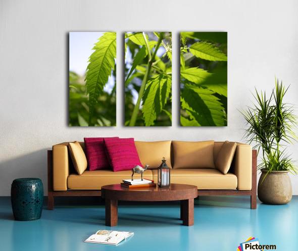 leaf with light Split Canvas print