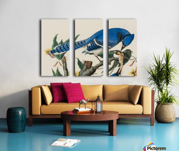 Blue Jay familly Split Canvas print
