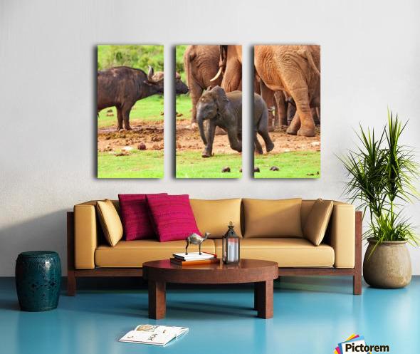 Elephant Baby 582 Split Canvas print