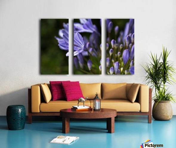 Agapanthus Blue Split Canvas print