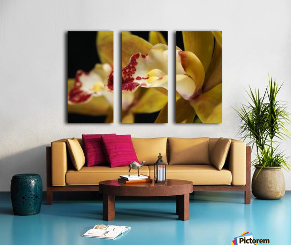 Green and Red Orchid Split Canvas print