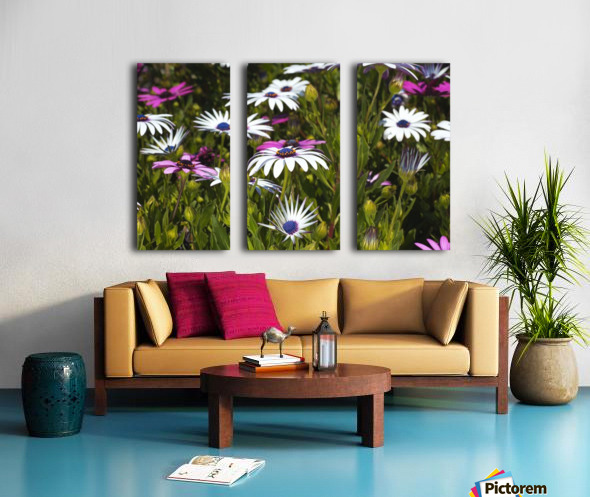 Daisies Of White And Pink Split Canvas print