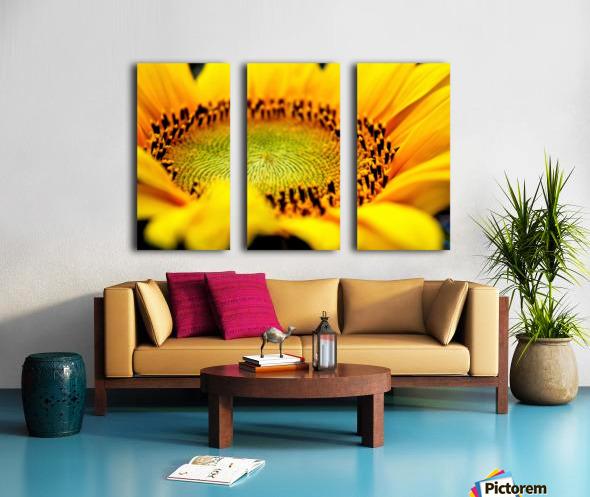 Sunflower Split Canvas print