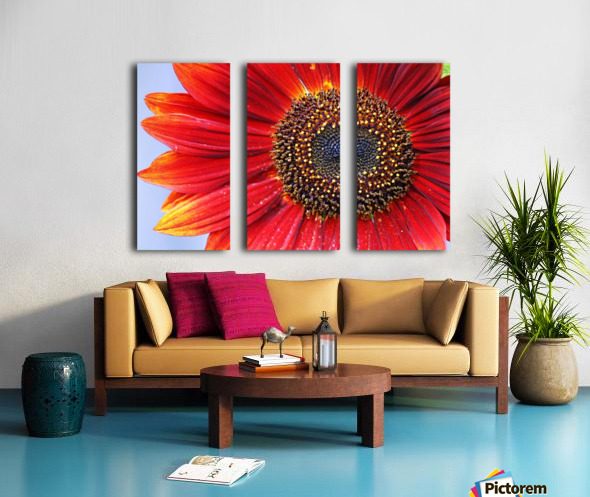 Ruby Red Sunflower Split Canvas print
