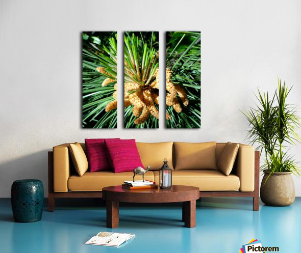 20190911_164917 Split Canvas print