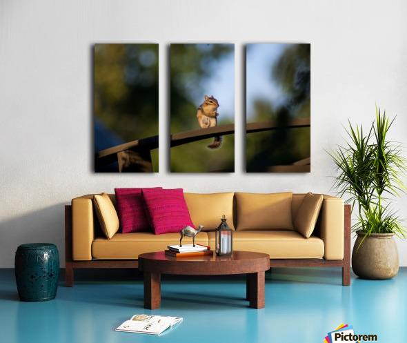 Squirrel Split Canvas print