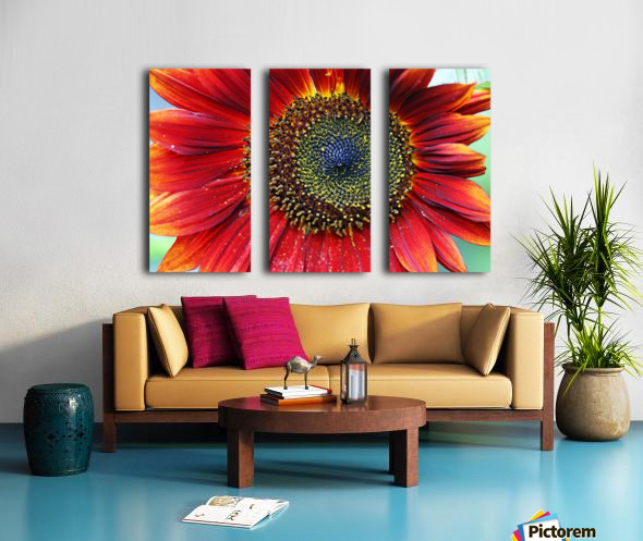 Red Sunflower With Yellow Tips Split Canvas print