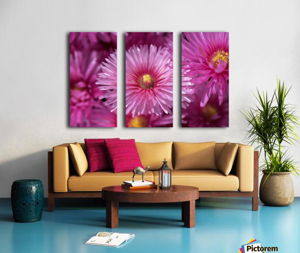 Pink Ice Plant Flowers Split Canvas print