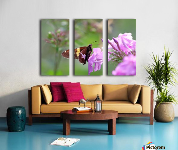 Silver Spotted Skipper Split Canvas print