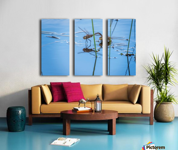 Dragonflies  Split Canvas print