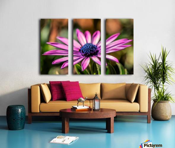 Daisy in Pink Split Canvas print