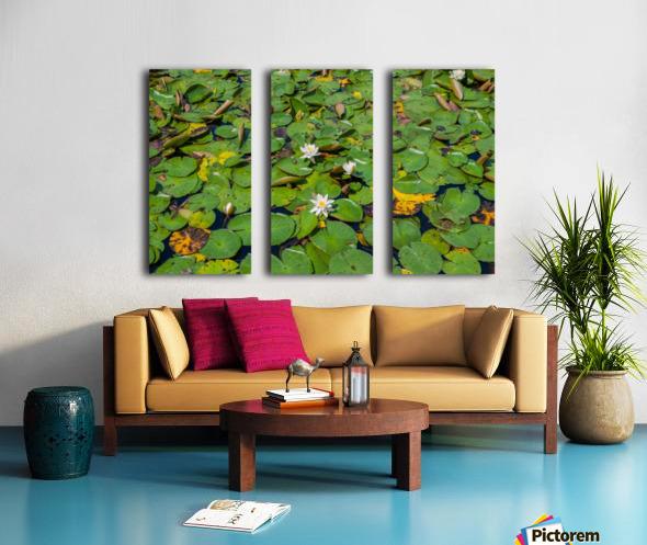 lily pads  Split Canvas print