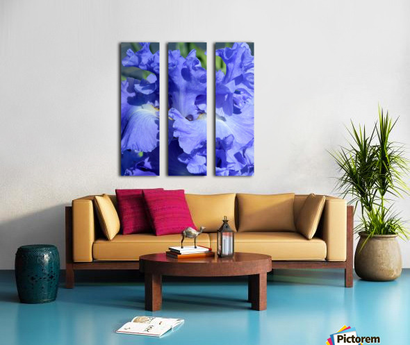 Metoleus Blue Bearded Iris Split Canvas print