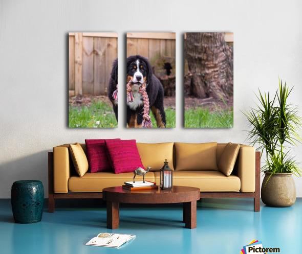Bernese Mountain Dog Puppy 8 Split Canvas print