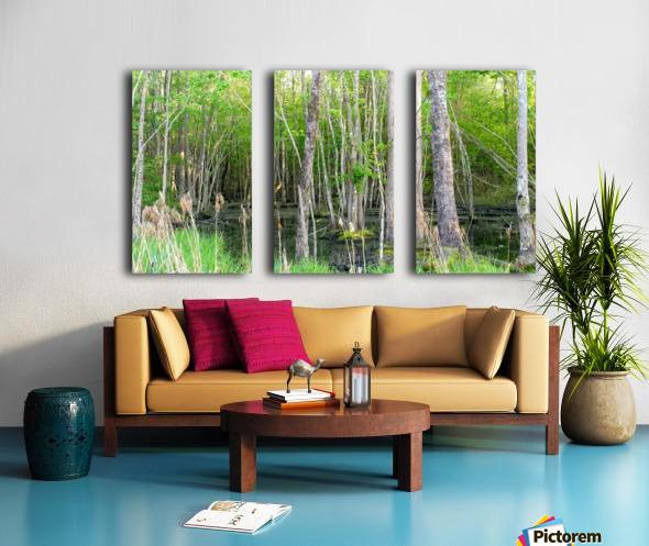 Swamp in Carolina Split Canvas print