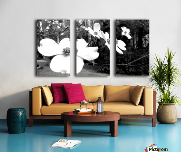 North Carolina Dogwood Flowers  Split Canvas print