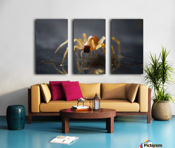 Best spider leg forward Split Canvas print