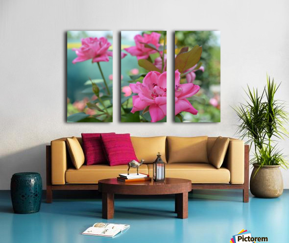 Pink Rose Garden Photograph Split Canvas print