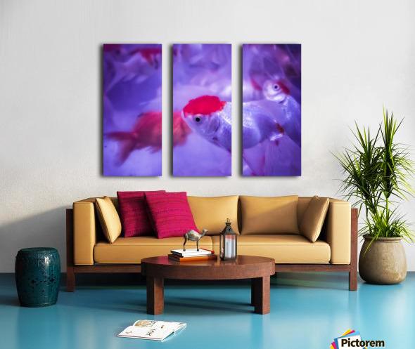 Golden Fish  Split Canvas print