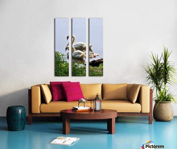Swans and Sygnets on lake Split Canvas print