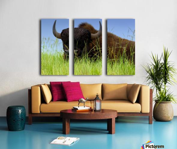Female Bison Split Canvas print