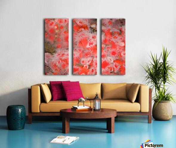 IMG_0613_1 Split Canvas print