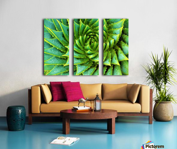 Cactus Spiral Split Canvas print
