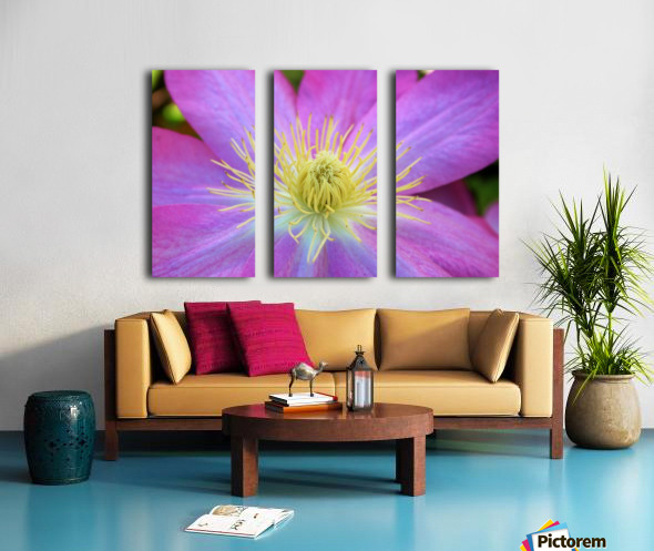 Purple Clematis Split Canvas print