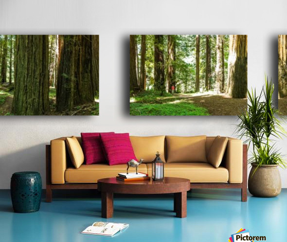 Redwood National Park Split Canvas print